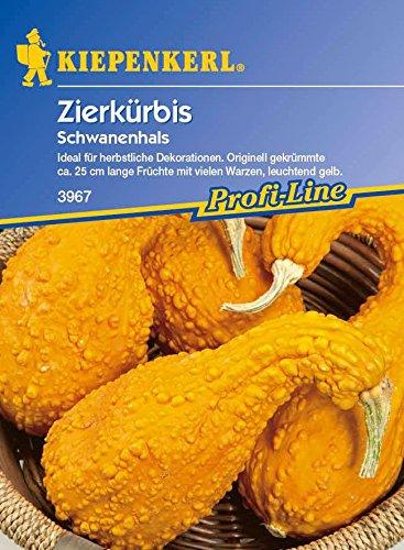 Kiepenkerl Zierkürbis Schwanenhals [MHD 01/2019]