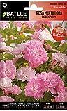 Semillas de Flores - Rosa Multiflora Garden Party - Batlle