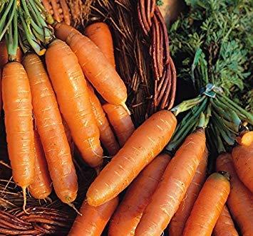 Homely Suffolk Herbs - Forçage biologique d'Amsterdam à la carotte - 250 graines