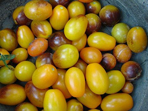 NEW VERIETY 2015/16 Indigo Kumquat, stunning tomato! 20 graines