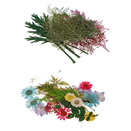 Descripción: - Totalmente 30 piezas de flores y 24 piezas de hojas incluidas - Hecho de flores naturales o hojas, por lo tanto, cada pieza varía ligeramente en tamaño y forma. - Formas y colores de flores bien conservadas. - Pe...