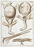 Vintage Anatomie 'EINE VOLLSTÄNDIGE ABHANDLUNG DER MUSKELN. Abbildung 18, Muskeln des Penis' von John Browne, England, des 17. Jahrhundert. 250 g/m², glänzend, Kunstdruck, A3, Reproduktion