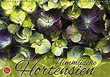Himmlische Hortensien (Wandkalender 2019 DIN A3 quer): 12 wunderbare Hortensien Portraits (Monatskalender, 14 Seiten ) (CALVENDO Natur)