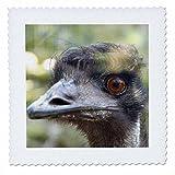 3drose QS _ 76226_ 2Fett Gesicht, Taronga Zoo, Sydney,
