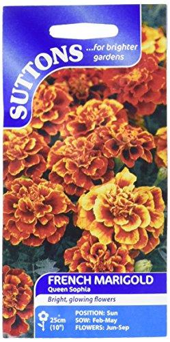 Suttons Seeds 121803 Œillet d'Inde Queen Sophia