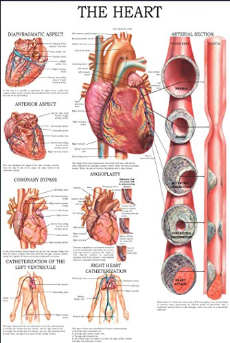 The heart: E-chart, full illustrated (English Edition) (Flow Chart Blood)