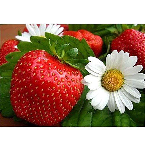 Strass 5D Stickerei Kreuzstich Kunst Handwerk Dekoration rote Mohnblume, Gänseblümchen ()