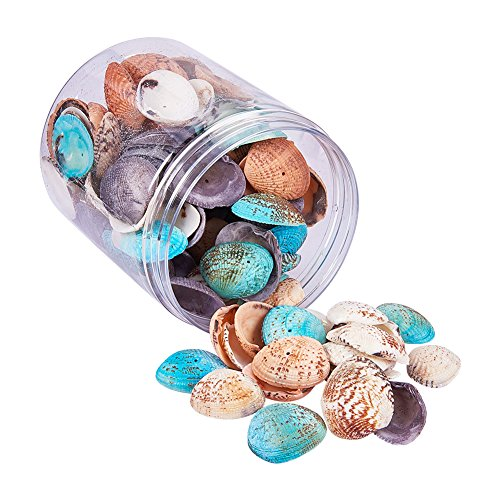 ox Shell Perlen Craft Shells Dekorationen für DIY Crafts (Muschel-box)