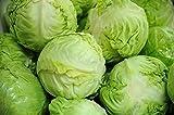 Semillas de repollo Kamienna Glowa - Brassica oler. convar capitata var. alba