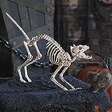 cama24com Halloween Skelett Katze Horror-Grusel-Party-Deko Palandi®