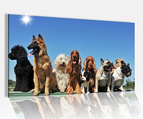 Acrylglasbild 80x50cm Hunde Hund Hunderassen Tier Pudel Glasbild Bilder Acrylglas Acrylglasbilder Wandbild 14D196, Acrylglas Größe4:80cmx50cm -