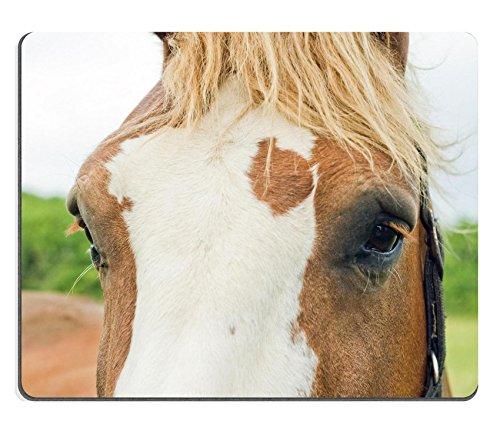 luxlady Gaming Mousepad-ID: 42499225Portrait Of A Horse Walking On Die Breite Wiesen Nähe der cameret Sur Mer Bretagne Frankreich (Walking-frankreich)