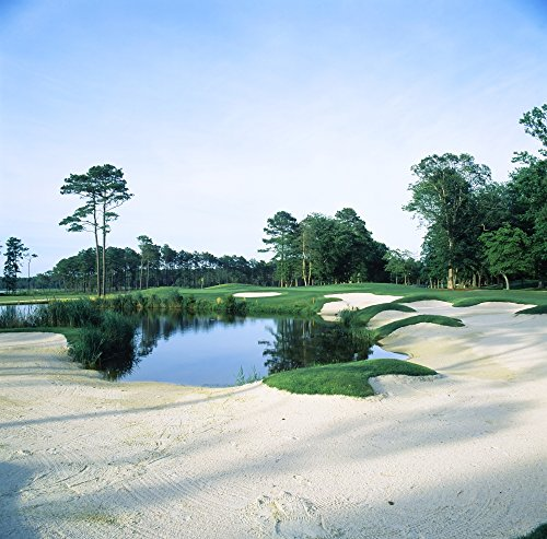 Panoramic Images – Trees in a golf course Ocean City Golf and Yacht Club Berlin Worcester County Maryland USA Photo Print (60,96 x 60,96 cm) (Course Golf City)