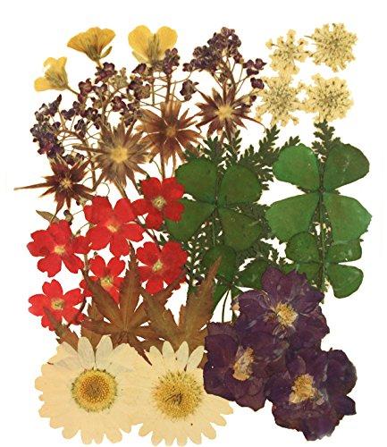 chpaket, Rapssamenblüte, Spitzeblume, Alyssum, Sternblume, Verbena, Marguerite, Larkspur, Shamrock, Ahorn, Laub ()