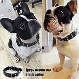 Französische Bulldogge Cool Pu Stift Halsband
