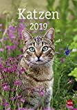 Katzen - Kalender 2019