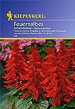 Sperli Blumensamen Feuersalbei Johannisfeuer
