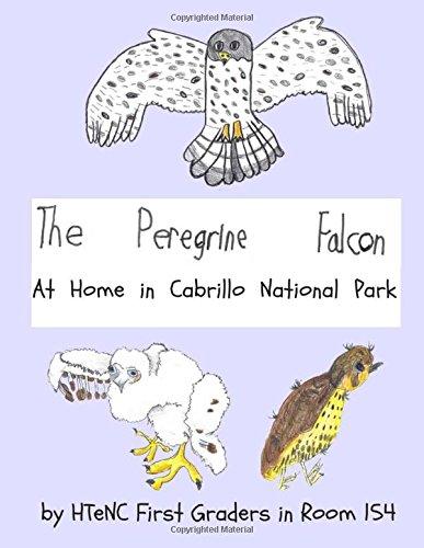 The Peregrine Falcon: At Home in Cabrillo National Park