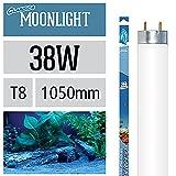 Arcadia Ocean Moonlight 38 Watt Lampe Aquarium Leuchtstofflampe