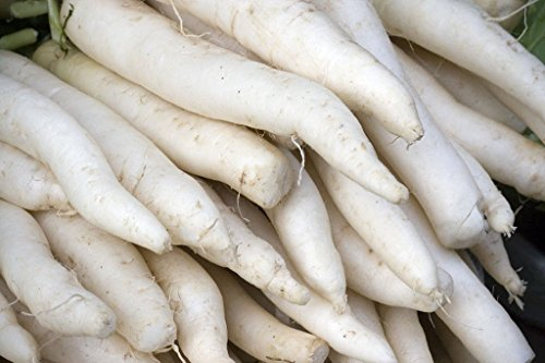 radis, MINOWASE JAPONAIS blanc, GIANT 2 pieds de long! daikan 50 graines Groc