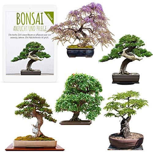 Exotische Bonsai Samen mit hoher Keimrate - Pflanzen Samen Set für deinen eigenen Bonsai Baum (5er Set inkl. GRATIS eBook)