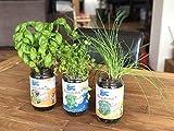 Blue Farmers | Herbes aromatiques | Cultivez votre Coriandre, Ciboulette et Basilic à la Maison | Pousse toute l'année | Graines Françaises et BIO | Facile et Ludique | Potager d'intérieur