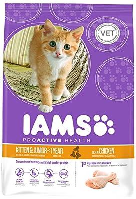 Iams Kitten (1)