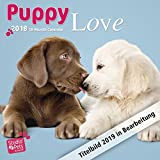 Puppy Love – Hundewelpen 2019 - 18-Monatskalender (Myrna-Kalender)