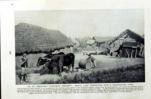 ranch-immigre-de-c1920-uruguay-cultivant-la-famille-de-betail