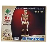 SODIAL Kind (R) Montieren Menschliches Skelett-Modell 3D-Holz-Puzzle Spielzeug Construction Kit