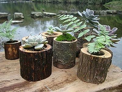 amgateeu 12,7cm natur Holz Übertopf Mini Baumstumpf Design Blumentopf von AmgateEu auf Du und dein Garten
