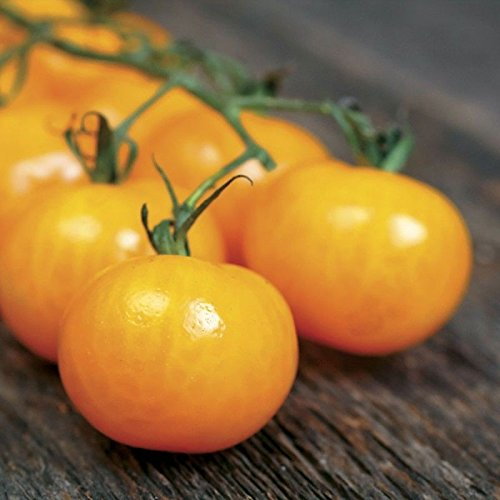 PLAT FIRM GERMINATIONSAMEN: 25 - Samen: Golden Gem Hybrid F1 Tomatensamen - neue Kirschtomate aus China !!!!!