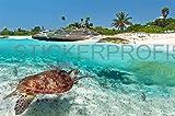 StickerProfis Poster Selbstklebend Meer Schildkröte als Fliesenaufkleber Oder Fototapete L