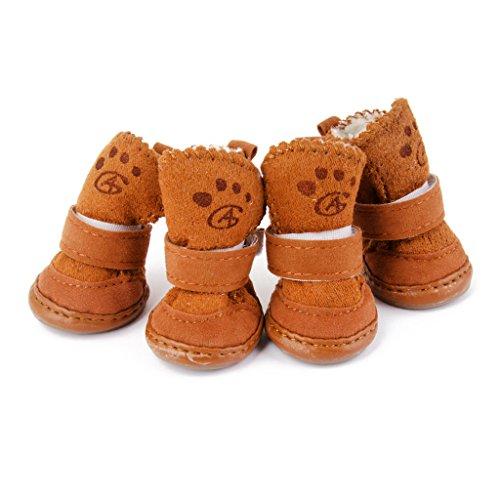 Scarpe per cani Chihuahua.