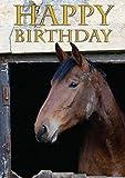 Pferd Hunter Ruhender Geburtstagskarte von Charles Sainsbury-Schollen