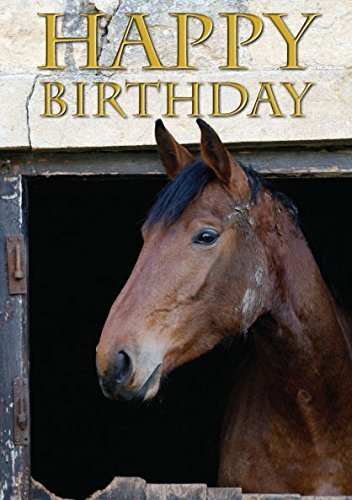 resting-hunter-horse-birthday-card-by-charles-sainsbury-plaice