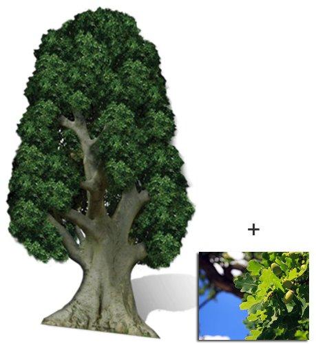 Eiche Baum Lebensgrosse Pappaufsteller mit 25cm x 20cm foto