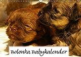 Bolonka Babykalender 2018 (Wandkalender 2018 DIN A3 quer): Ein gelungener Kalender mit hinreißenden...