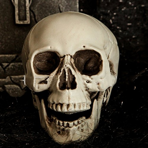 (Halloween-Skelett-Schädel 7,5 Zoll realistische menschliche Kunststoff Schädel-Kopf-Halloween-Stütze)