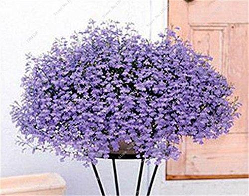 Bleu Fleur de Lin Graine vivace Fleur Graine Quatre Saisons Fleur plantes ornementales tropicales en plein air Bonsai Lin Semilla 100 Pcs 9