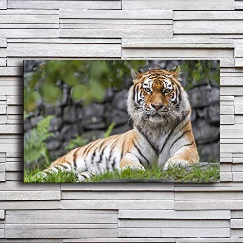 LPHMMD Leinwand Wandbild Leinwand Poster Nacht Hintergrund Wandkunst 1 Stück Tiere Zoo Tiger Gemälde Wohnkultur Wohnzimmer Bilder-50x70cm -