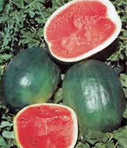 SEED Watermelon, BLACK DIAMOND, HEIRLOOM, BIO 100 graines, MELON, NON OGM
