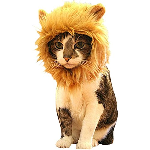 Morbuy Reizende Katzenkostüm Hunde Haustier Löwenkostüm Kleidung, Haustier Kostüme Kleidung Katze lustiges Hunde Katze Halloween Karneval Cosplay (Gold)