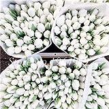 Casavidas 100 PC/g Bonsai Semillas Semillas flor del arco iris en maceta de Bonsai Inicio Gard ing cuatro estaciones 24 Variedades: 2