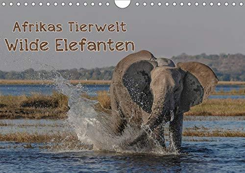 Afrikas Tierwelt - Wilde Elefanten (Wandkalender 2020 DIN A4 quer): Wild und...