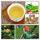 Bloom Green Co. 10 Stück chinesischer grüner Tee-Baum Bonsai Für Hausgarten Mehrjährige Pflanzen keine Blumen Erbstück Sementes Nicht Camellia Bonsai