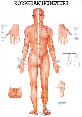 Ruediger Anatomie TA10_2 Körperakupunktur II Tafel, 70 cm x 100 cm, Papier