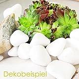 MGS SHOP Dekokies Dekosteine Streudeko Kies - Farbe wählbar (5 kg, Schneeweiß 15-25) - 6