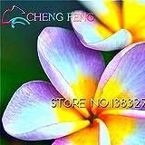 50 Samen Home Garten Frangipani Plumeria rubra Lei Ei-Blumen-Samen Bonsai Geschenk Sehr einfache Anlage Indoor-Pflanzen Blumen