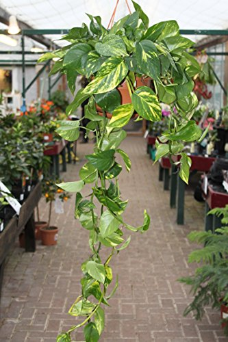 Garden Market Place